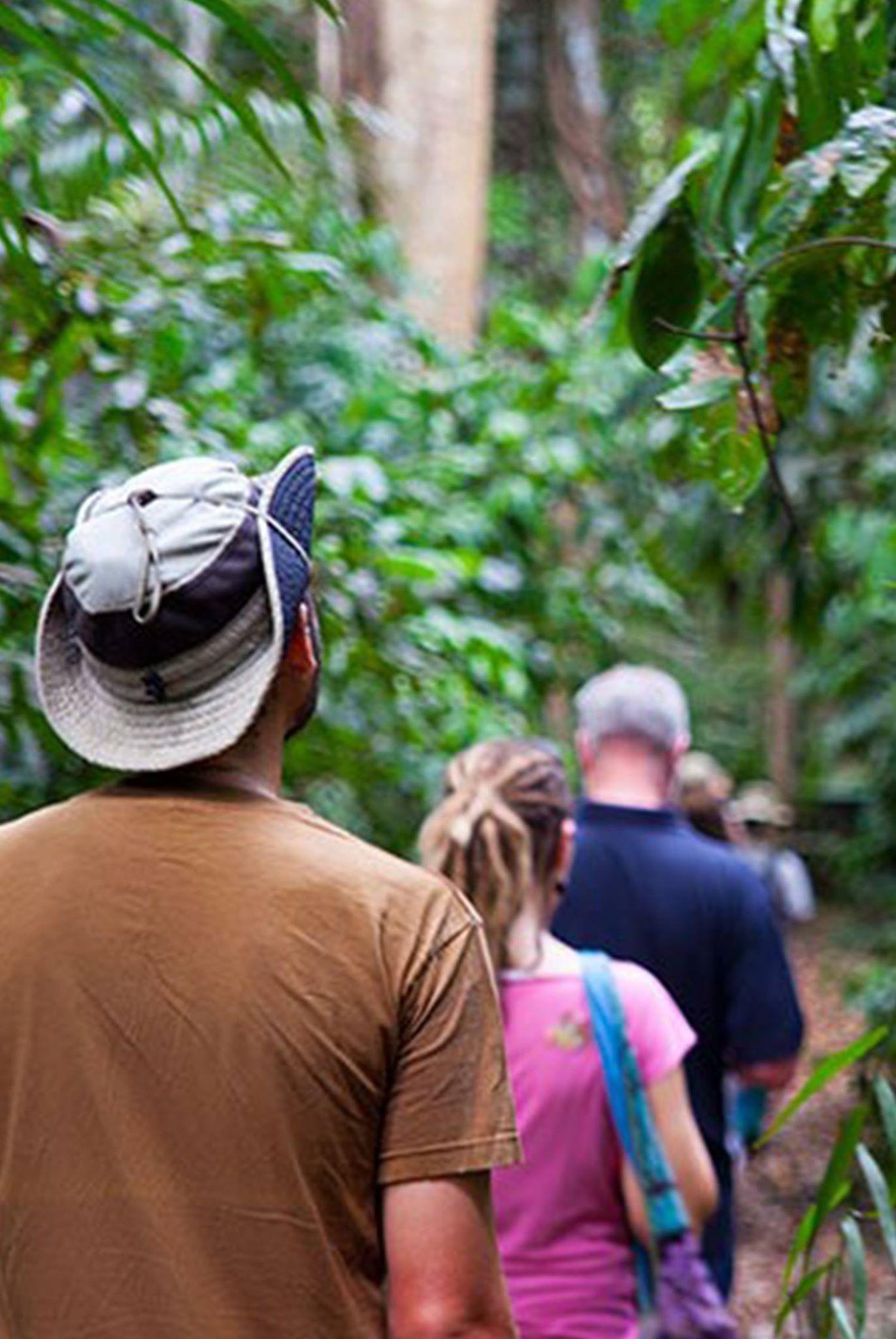 NGEZI FOREST TOUR
