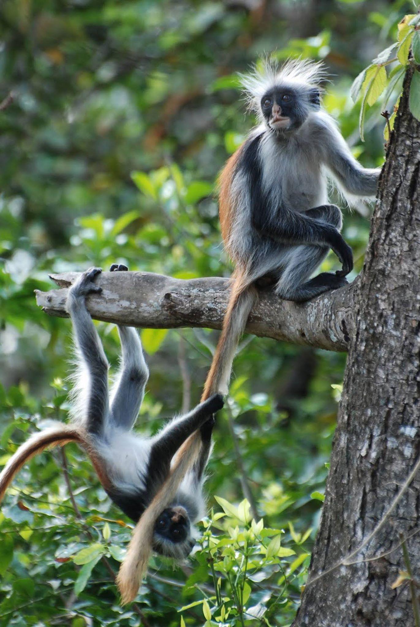 JOZANI FOREST TOUR IN ZANZIBAR