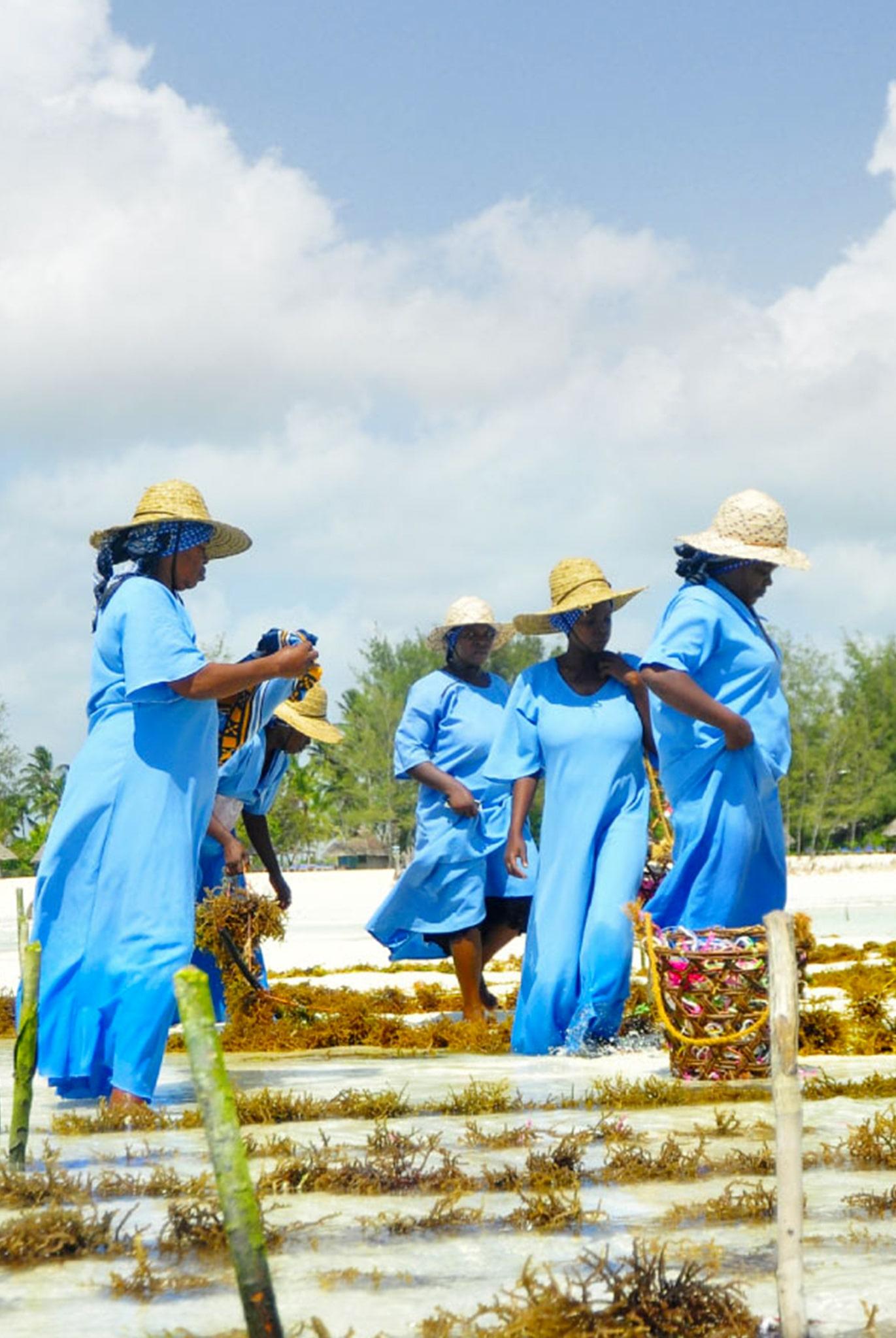 Zanzibar Seaweed Farming Tour