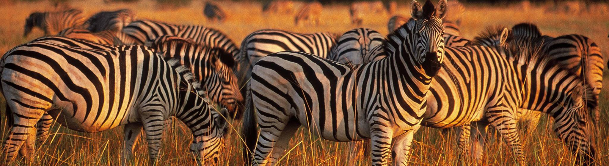 Tanzania Safaris and Beach Vacations - Safanta Tours & Travel Company Limited