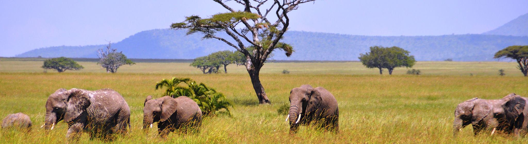 Tanzania Safaris and Beach Vacations - Safanta Tours & Travel Company Limited