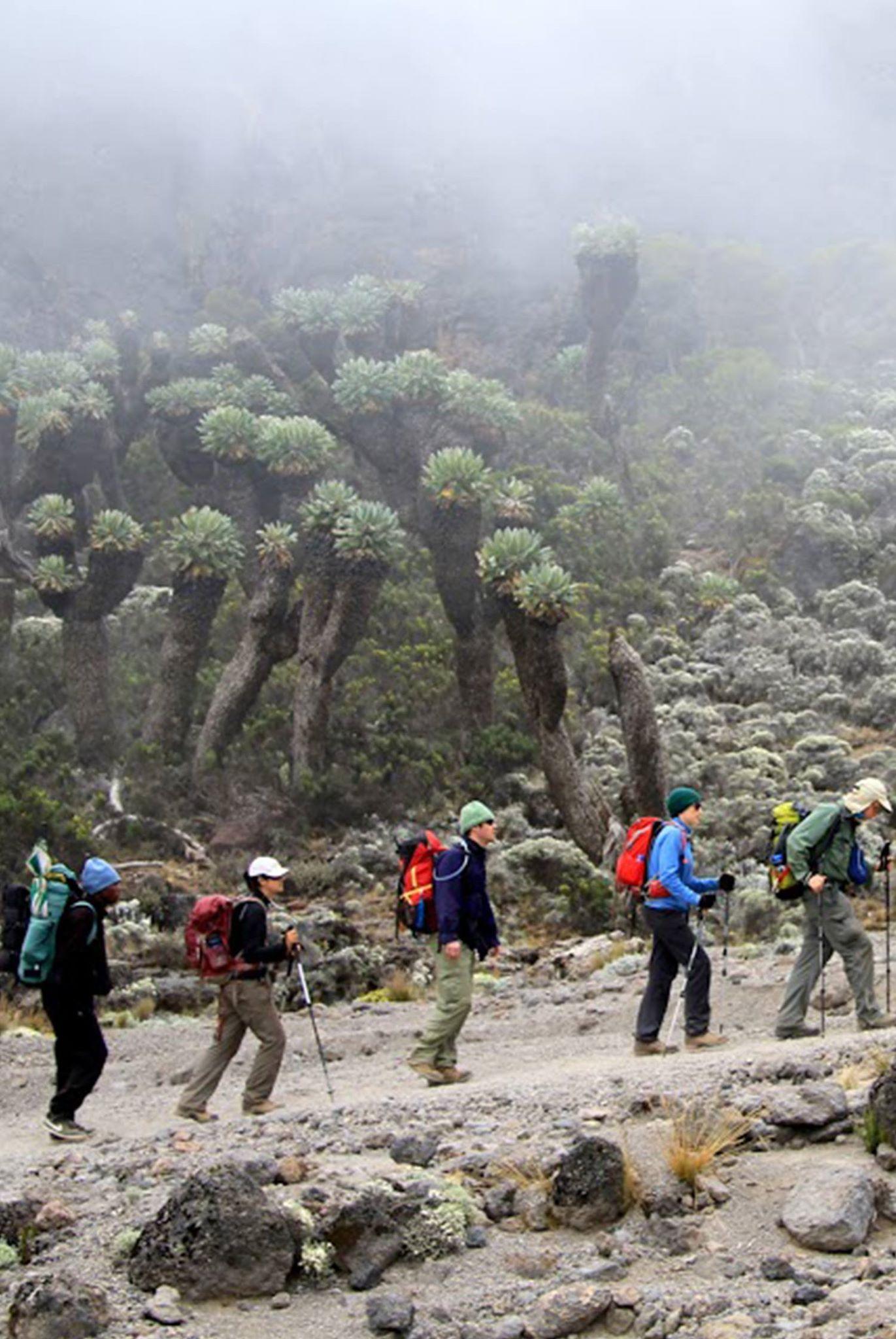 Mount Kilimanjaro & Beach Leisure