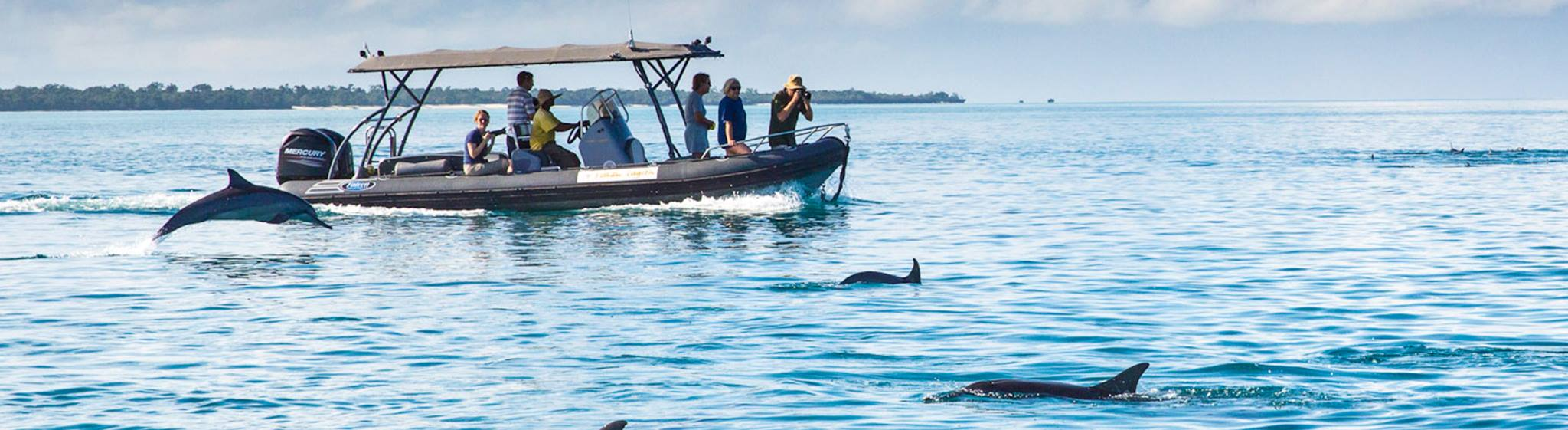 Kizimkazi Dolphin Tour - Safanta Tours & Travel Company Limited